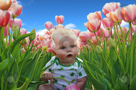 Infant boy in tulips stock photo, Infant boy in tulips by Michiel De Wit