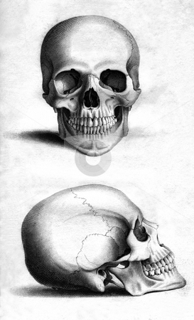 Human skull stock photo, Front and side engraving of human skull by William Miller after drawing by W Miller, published in Engravings of the Skeleton of the Human Body. John Gordon MD. Blackwood, Edinburgh 1818. Public domain image by virtue of age. by Martin Crowdy