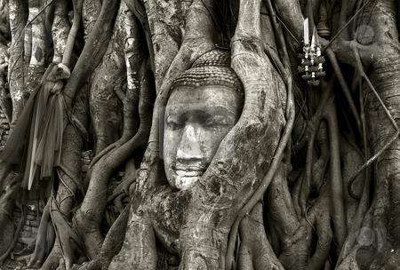 Budda stock photo, Stone budda head traped in the tree roots ayttaya thailand by Charles Taylor