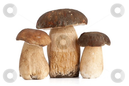 Boletus mushroom stock photo, Three Boletus Edulis mushroom isolated on white background by ANTONIO SCARPI