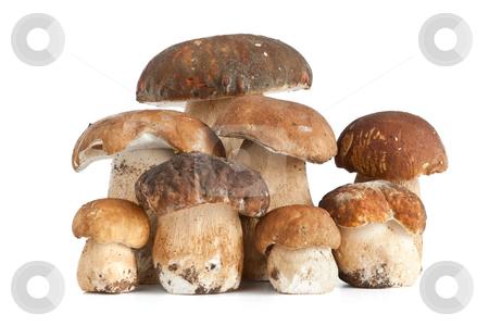 Boletus mushroom stock photo, Group of Boletus Edulis mushroom isolated on white background by ANTONIO SCARPI
