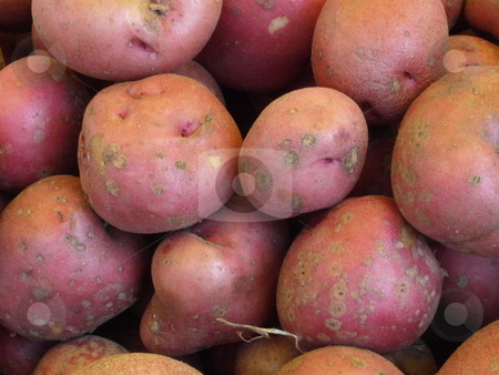 Red potaotes stock photo, Red potatoes at a local farmers market by Tim Markley