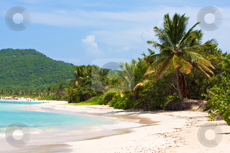 Culebra Island Flamenco Beach stock photo, Gorgeous coconut palm trees overlooking Flamenco beach on the Puerto Rican island of Culebra. by Todd Arena