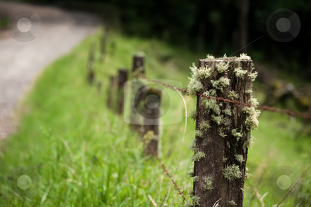 Epiphytes in Costa Rica stock photo, Epiphytes on fence post in Costa Rica by Scott Griessel