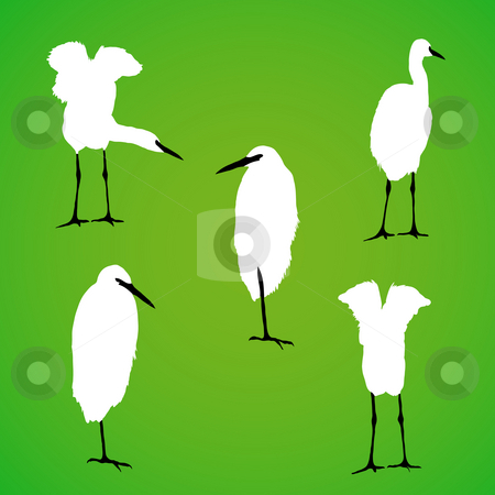 Vector bird silhouette stock photo, Detailed vector bird silhouette. by Homydesign