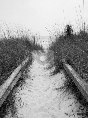Beach Path stock photo, A path to the beach shown in black and white by Tim Markley