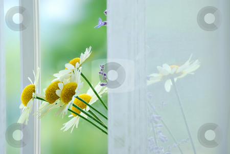Flowers stock photo, Bouquet of flowers on the window sill by HD Connelly