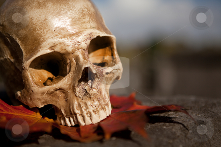 All Saint's skull on a tomb stock photo, All Saint's scene with a halloween skull in an autumn graveyard by Anneke