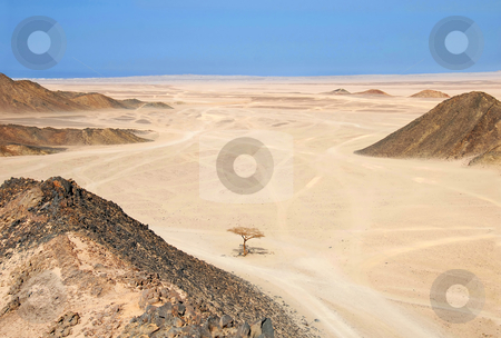 Egypt desert stock photo, Sahara dry desert with lonely tree by Hurghada, Egypt by Julija Sapic