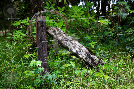 Rustic barbed wire fence in Costa Rica stock photo, Rustic barbed wire fence in Costa Rican cloud forest by Scott Griessel