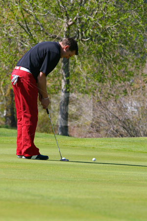 Male golfer stock photo, Young male golfer executing a putt on the greens by Vanessa Van Rensburg