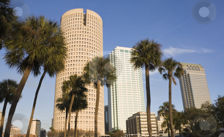 Palms and skyscrapers stock photo, Palms and skyscrapers in Florida by Henryk Sadura