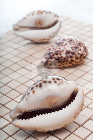 Cowrie Shells stock photo, Cowrie shells on mosaic tiles by Timothy Hodgkinson