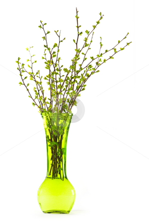 Vase of branches with green spring leaves stock photo, Green vase with spring branches isolated on white background by Elena Elisseeva