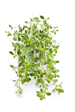 Fresh thyme on white background stock photo, Fresh green thyme closeup isolated on white background by Elena Elisseeva