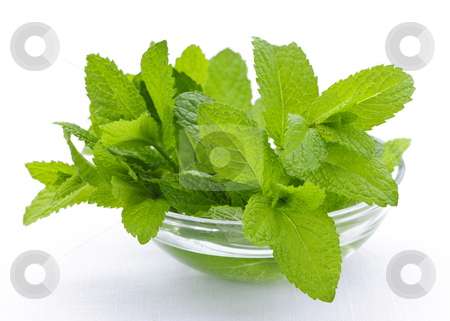 Mint sprigs in bowl stock photo, Bunch of fresh mint sprigs in clear glass bowl by Elena Elisseeva