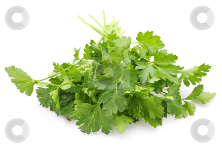 Fresh parsley on white background stock photo, Bunch of Fresh green parsley isolated on white background by Elena Elisseeva