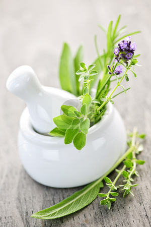 Healing herbs in mortar and pestle stock photo, Healing herbs in white ceramic mortar and pestle by Elena Elisseeva