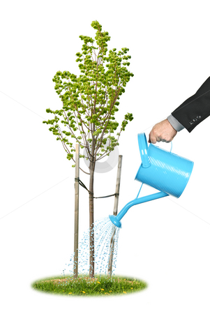 Businessman watering young tree stock photo, Hand of a businessman watering young tree by Elena Elisseeva