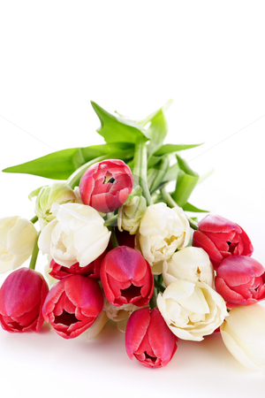 Red and white tulips stock photo, Bouquet of red and white tulips isolated on white background by Elena Elisseeva