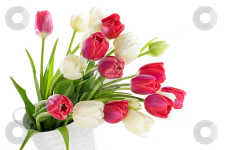 Red and white tulips stock photo, Bouquet of red and white tulips in metal bucket by Elena Elisseeva