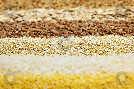 Various grains close up stock photo, Background of different kinds of grains close up by Elena Elisseeva