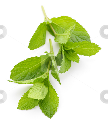 Mint sprigs stock photo, Fresh mint sprigs isolated on white background by Elena Elisseeva