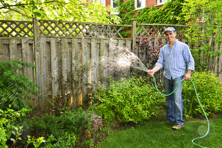 Man watering garden stock photo, Man watering the garden with hose in backyard by Elena Elisseeva