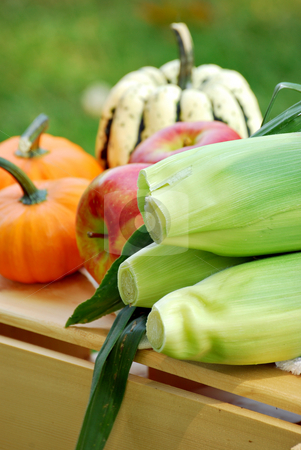 Fall harvest stock photo, Fresh-picked apples, pumpkins and corn on the cob by HD Connelly
