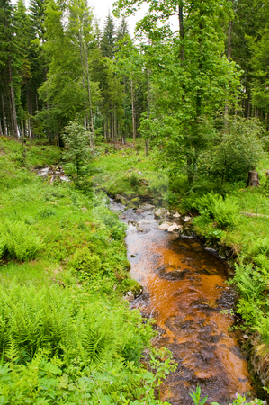 Wildwater stock photo, Calm brown river in the green Black Forest by Herb Allgaier