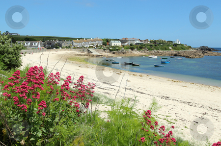 Old town beach red valerian, St. Mary's, Isles of Scilly, Cornwall UK. stock photo, Old town beach red valerian, St. Mary's, Isles of Scilly, Cornwall UK. by Stephen Rees