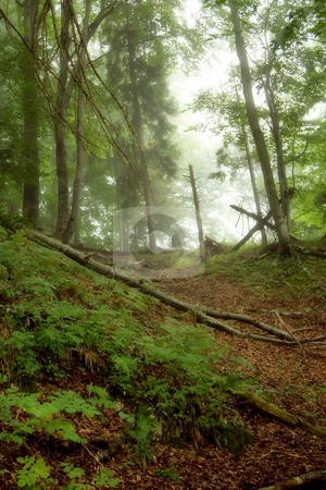 Mystical forest stock photo, Beautiful green mystical forest , soft focus photo by GPimages