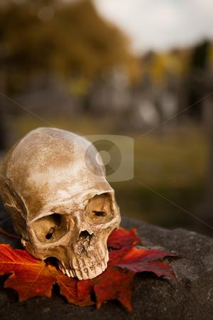 All Saint's skull in autumn stock photo, All Saint's scene with a halloween skull in an autumn graveyard by Anneke