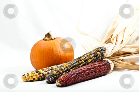 Pumpkin and Corn stock photo, Small pumpkin with multi colored indian corn isolated on white background by Joshua Minso