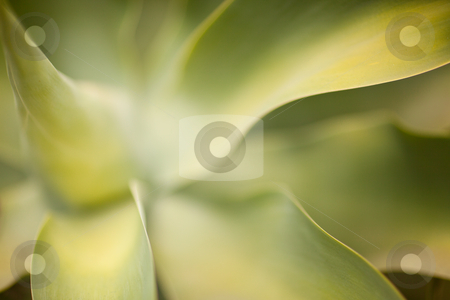 Abstract Cactus Succulent stock photo, Abstract Cactus Succulent with Narrow Depth of Field. by Andy Dean