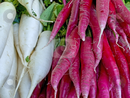 Red and white radish stock photo, Red and white radish by Hans-Joachim Schneider