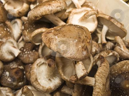 Shiitake mushroom stock photo, Shiitake mushroom at a farmer market by Hans-Joachim Schneider