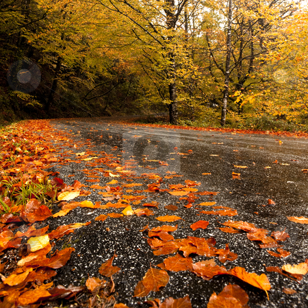 Autumn landscape stock photo, Autumn landscape with a beautiful road covered by colored leafs by ikostudio