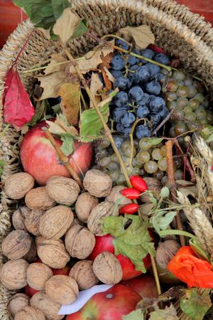 Autumn Harvest stock photo,  by Zvonimir Atletic
