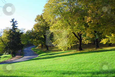 Autumn morning stock photo, Beautiful autumn colors of the trees in the park. Morning light by zagart