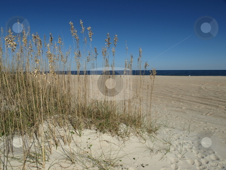 Beaches stock photo, Along the shore in North Carolina by Tim Markley