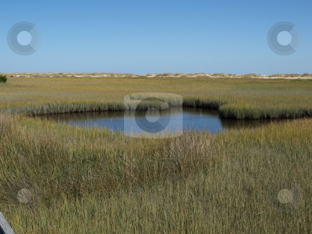 Marsh pond stock photo, View of a marsh along the North Carolina Shore by Tim Markley