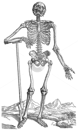 Skeleton digging own grave stock photo, Illustration of skeleton leaning on shovle or spade digging own grave, white background, engraving published in book by Andreas Vesalius,