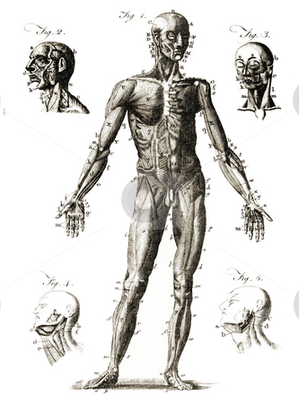 Human Anatomy stock photo, Diagram showing labelled human anatomy. Published by unknown engraver in Enclyclop?dia Britannica, 1771. Public domain image by virtue of age. by Martin Crowdy