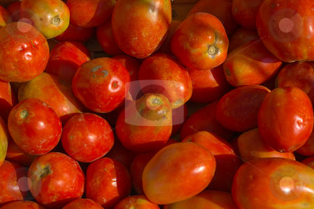 Tomate (Solanum lycopersicum) - Tomatoe stock photo, Familie der Nachtschattengew?chse by Wolfgang Heidasch