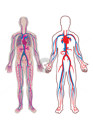 Human vein in vector stock vector similar images human digestive system in vector ccuart Gallery