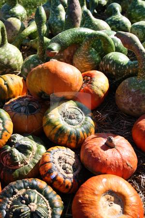 Fresh pumpkins stock photo, Pretty different types of pumpkins for sale by Viktor Thaut