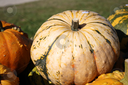 Fresh pumpkins stock photo, Pretty different types of pumpkins for sale by Viktor Thaut
