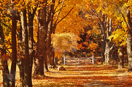 Autunm Scenes stock photo, Fall,trees,color,autunm,pretty,