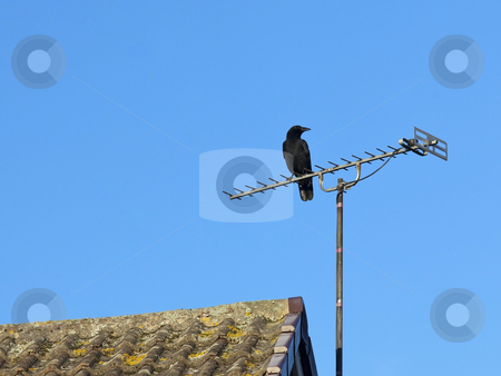Black crow stock photo, A carrion crow corvus corone corone sitting on a television aerial with blue sky background by Mike Smith